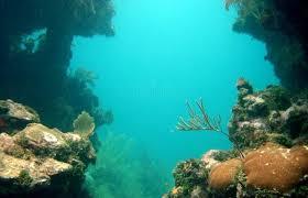 utila diving